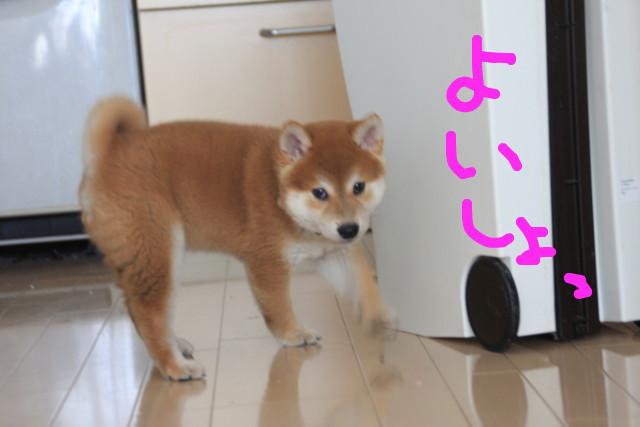f:id:maki-mama:20081208175526j:image:w300