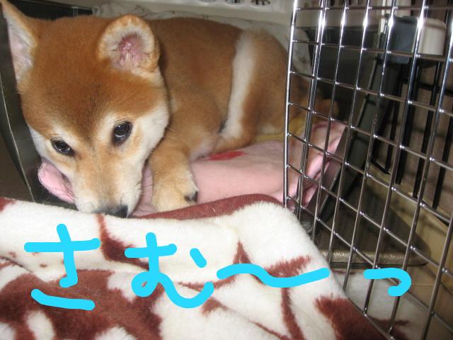 f:id:maki-mama:20081210094646j:image:w400