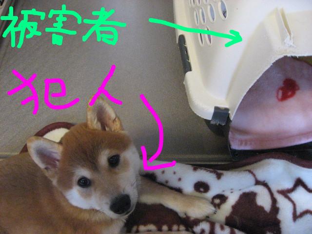 f:id:maki-mama:20081210094652:image:w300