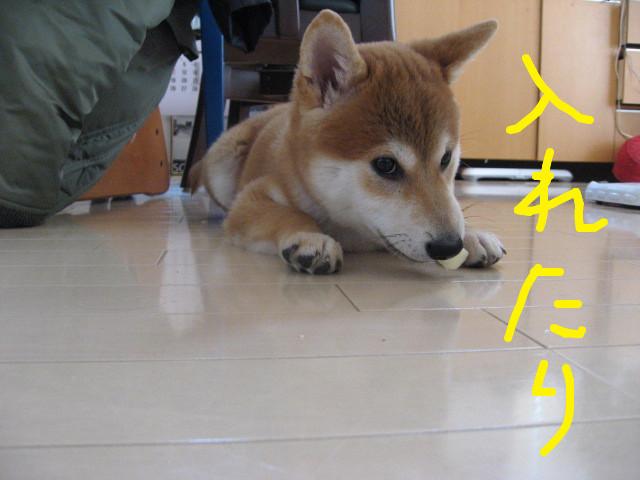f:id:maki-mama:20081211121206j:image:w400