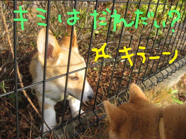 f:id:maki-mama:20081211121208j:image:w400