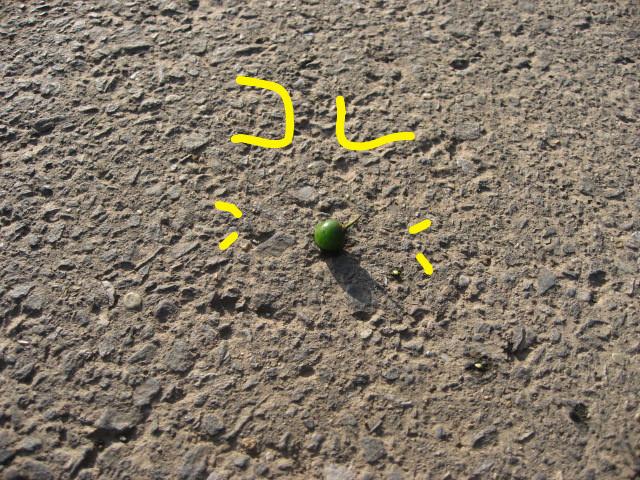 f:id:maki-mama:20081212145309j:image:w300