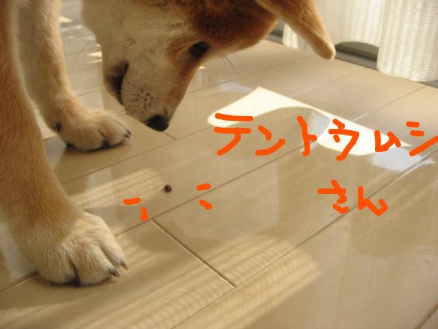 f:id:maki-mama:20081212145311j:image:w300