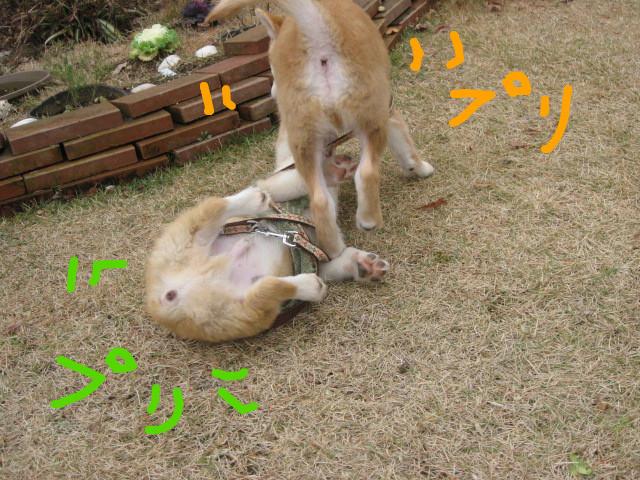 f:id:maki-mama:20081213111904j:image:w300
