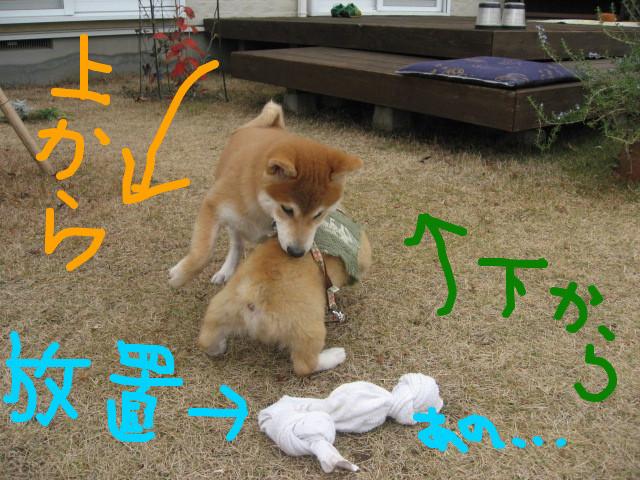 f:id:maki-mama:20081213111905:image:w300