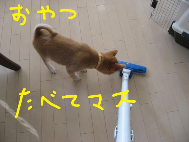 f:id:maki-mama:20081216090425j:image:w300
