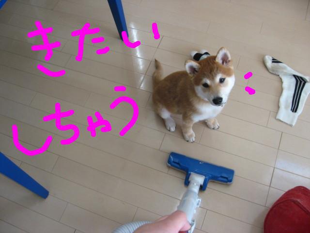 f:id:maki-mama:20081216090426j:image:w300