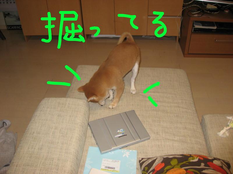 f:id:maki-mama:20081216091518j:image:w300