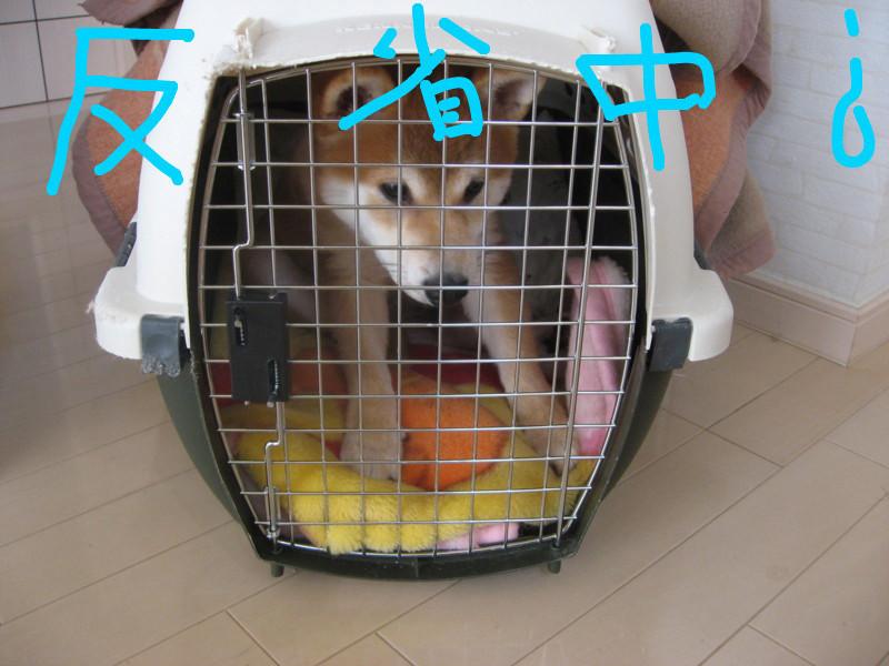 f:id:maki-mama:20081216091521j:image:w300