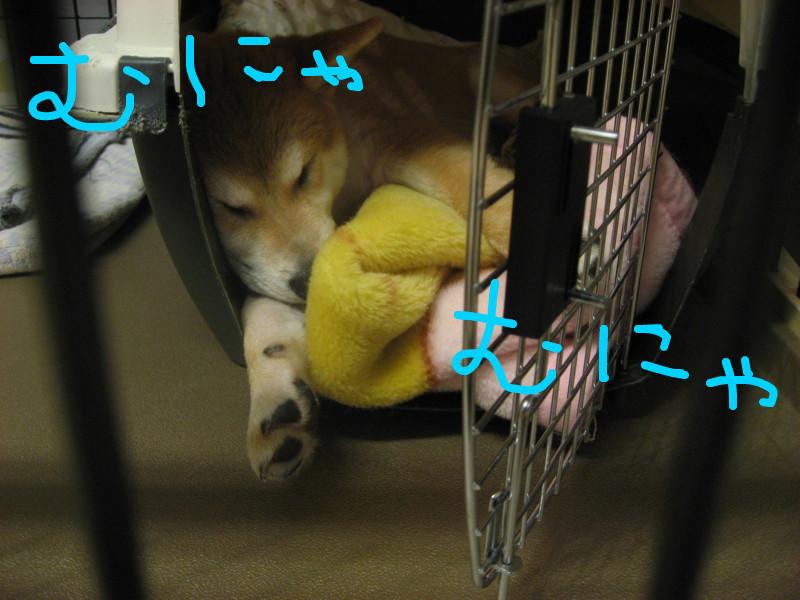 f:id:maki-mama:20081216164459j:image:w300