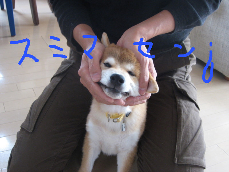 f:id:maki-mama:20081219124648j:image:w300