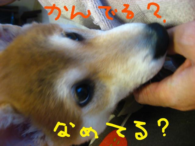 f:id:maki-mama:20081221081434j:image:w300