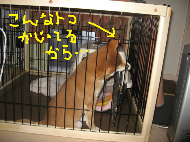 f:id:maki-mama:20081221081435j:image:w300