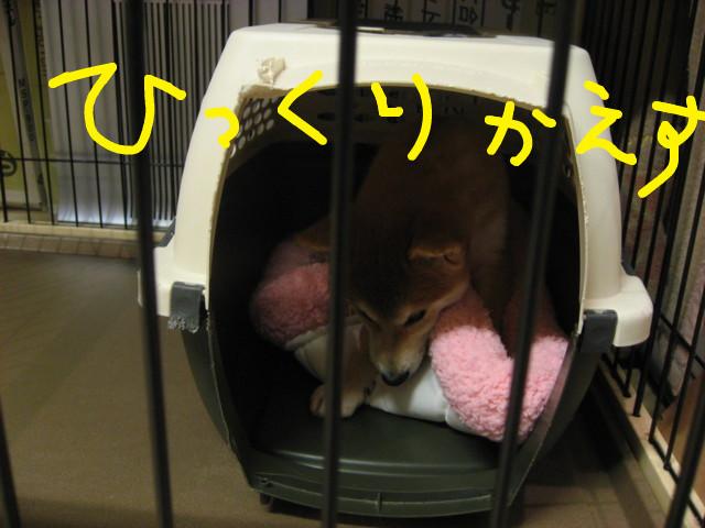 f:id:maki-mama:20081221200252j:image:w300