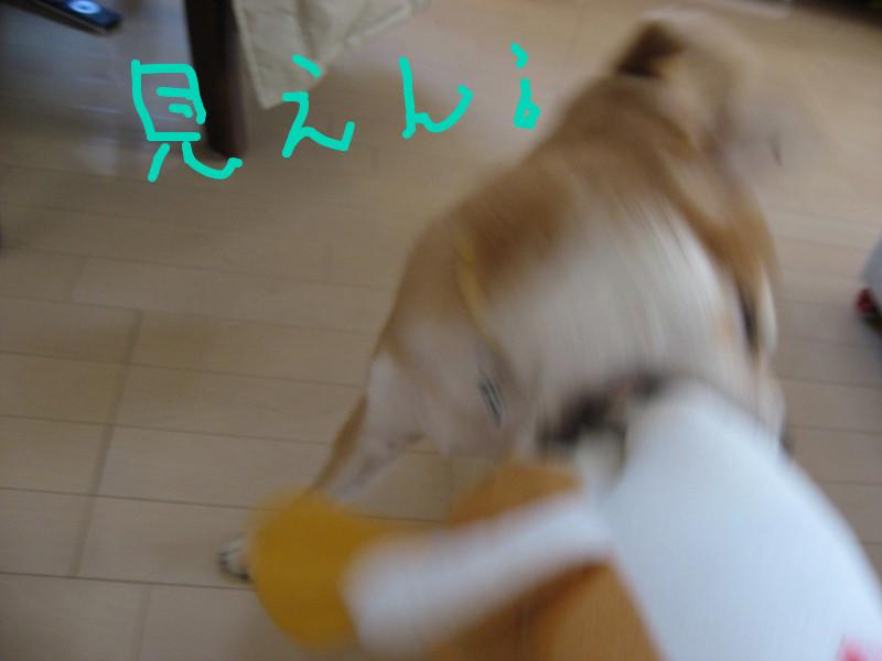 f:id:maki-mama:20081223085159j:image:w300