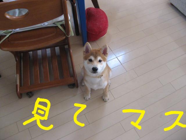 f:id:maki-mama:20081225102051j:image:w200