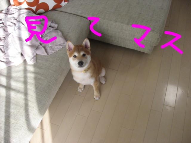 f:id:maki-mama:20081225102052j:image:w300