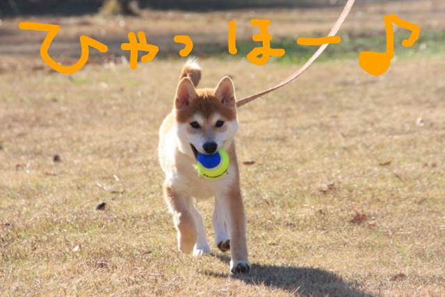 f:id:maki-mama:20081227154812j:image:w300