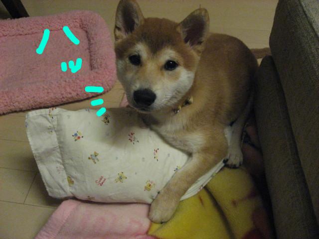 f:id:maki-mama:20081230110329j:image:w300