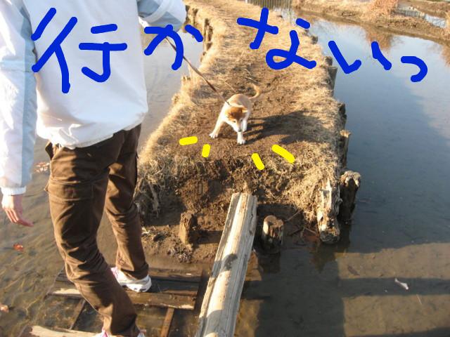 f:id:maki-mama:20081230143247j:image:w300