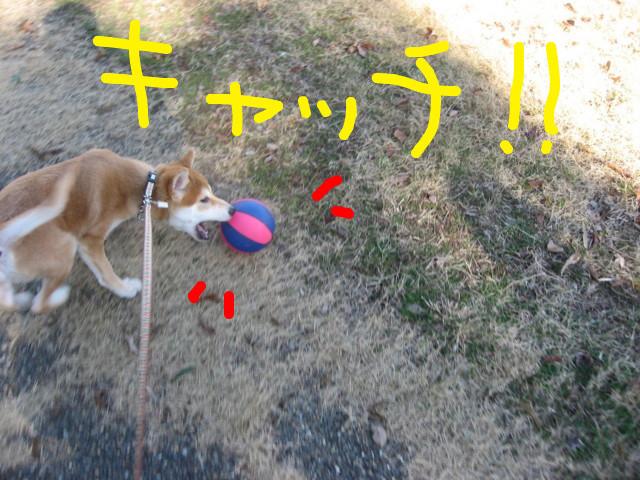f:id:maki-mama:20081231180738j:image:w300