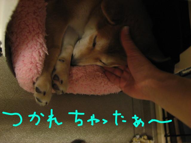 f:id:maki-mama:20081231193920j:image:w300