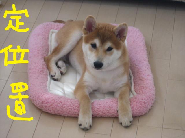 f:id:maki-mama:20090101103418j:image:w300