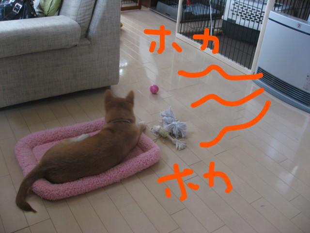 f:id:maki-mama:20090105203107j:image:w300