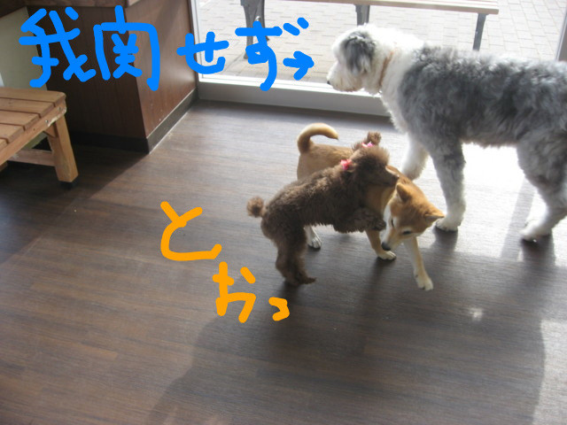 f:id:maki-mama:20090108092159j:image:w300