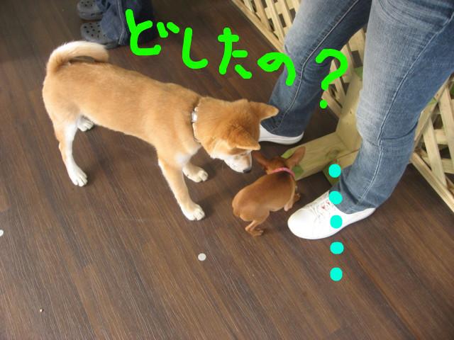 f:id:maki-mama:20090108092201j:image:w300