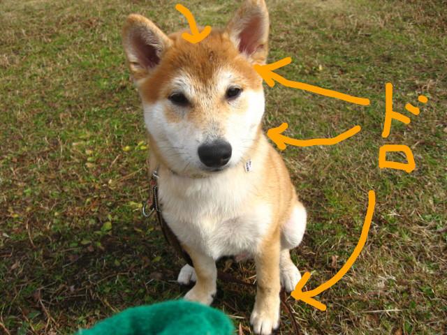 f:id:maki-mama:20090111080216j:image:w300