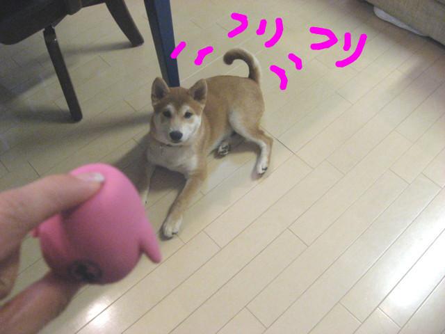 f:id:maki-mama:20090111080218j:image:w300