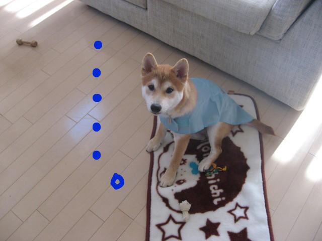 f:id:maki-mama:20090111122829j:image:w300