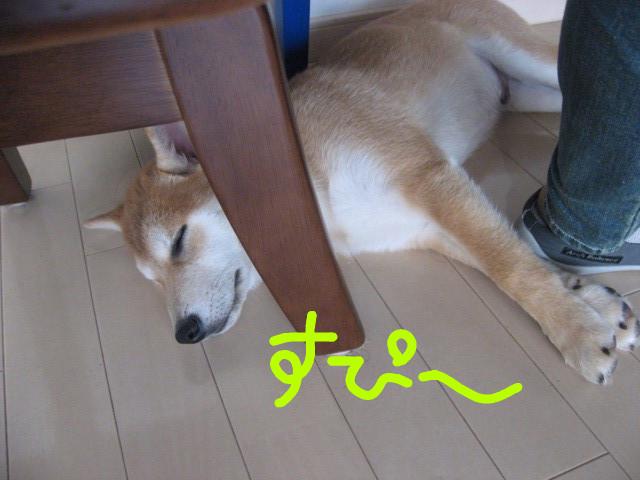 f:id:maki-mama:20090112103925j:image:w300