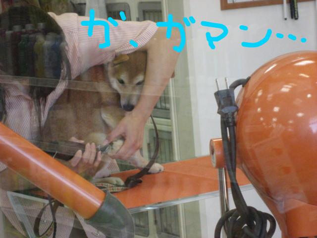 f:id:maki-mama:20090115140217j:image:w300