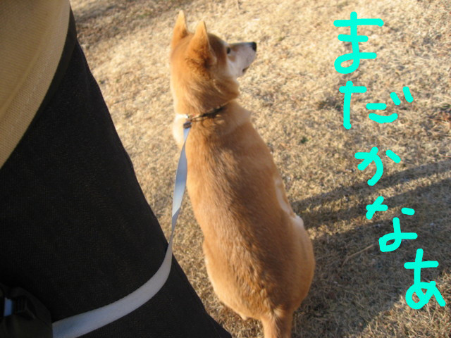f:id:maki-mama:20090116102458j:image:w300