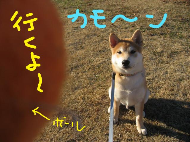 f:id:maki-mama:20090116102504j:image:w300
