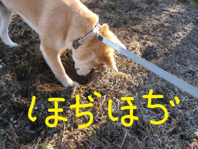f:id:maki-mama:20090117105502j:image:w300