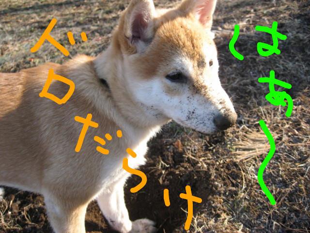 f:id:maki-mama:20090117105503j:image:w300