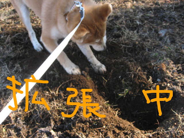 f:id:maki-mama:20090117105504j:image:w300