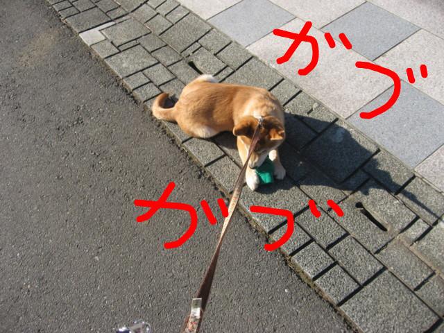 f:id:maki-mama:20090117105508j:image:w300