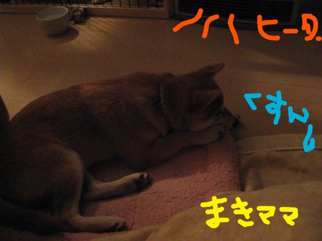 f:id:maki-mama:20090121081253j:image:w300