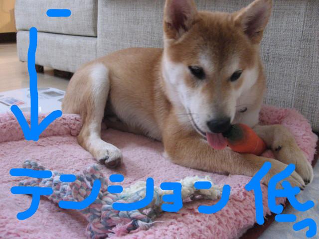 f:id:maki-mama:20090121135849j:image:w300
