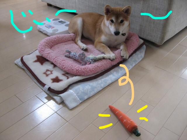 f:id:maki-mama:20090121135850j:image:w300