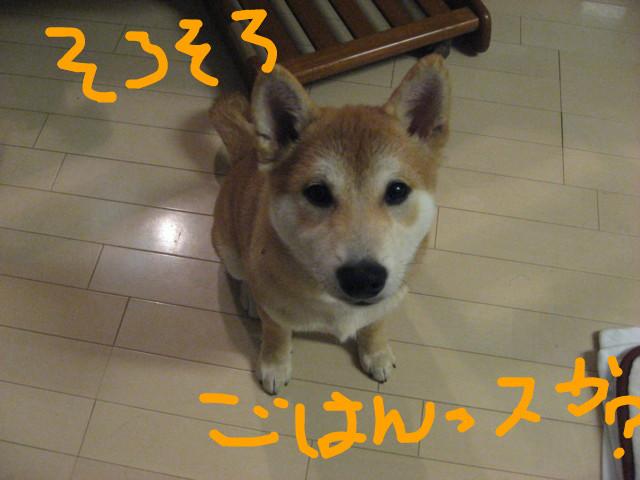 f:id:maki-mama:20090121181657j:image:w300