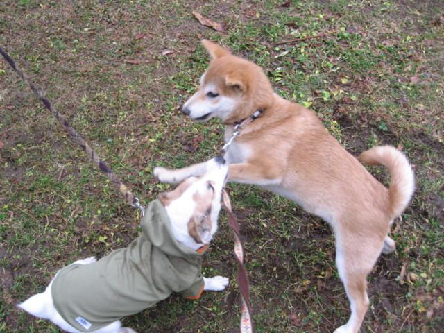f:id:maki-mama:20090122085615j:image:w300
