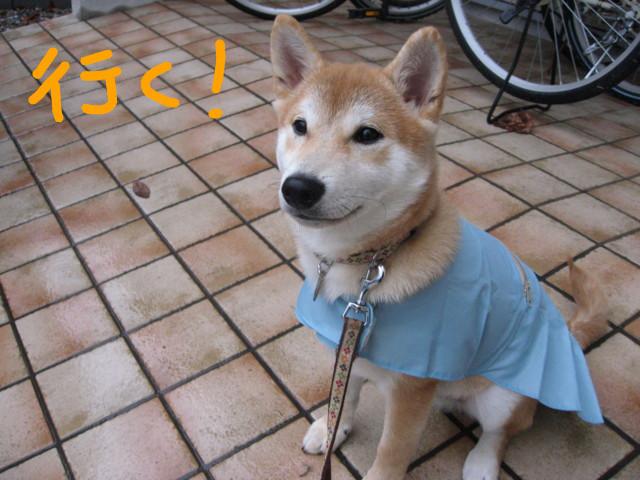 f:id:maki-mama:20090123083436j:image:w300
