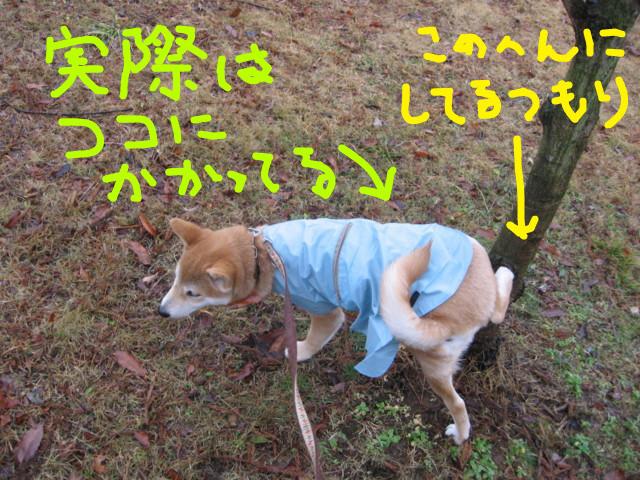 f:id:maki-mama:20090123083437j:image:w300