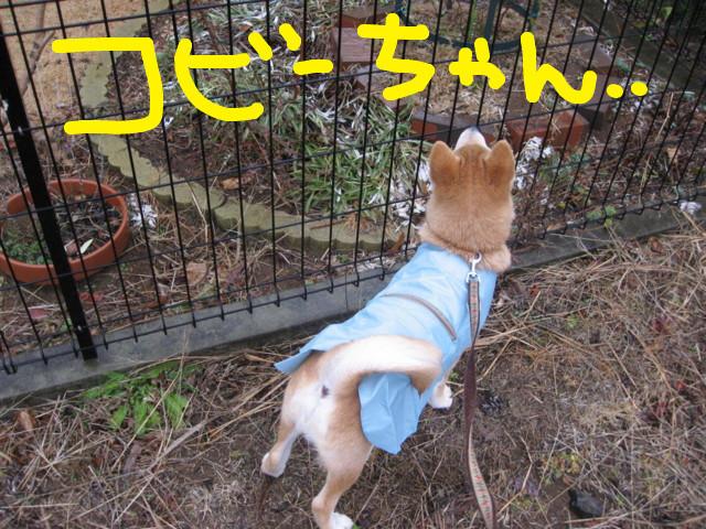 f:id:maki-mama:20090123083438j:image:w300