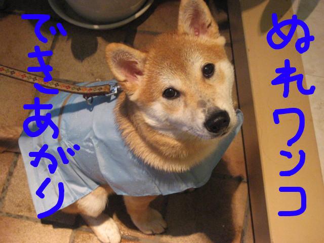 f:id:maki-mama:20090123083439j:image:w300